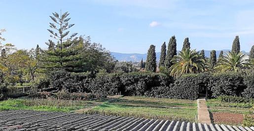 Algunas de las parcelas del huerto urbano del vivero municipal, ubicado en el barrio de s'Indioteria.