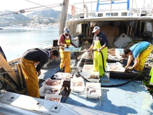 Limitaciones europeas. La nueva normativa europea, aprobada el pasado diciembre, reduce de nuevo el esfuerzo pesquero de las embarcaciones de arrastre que implicará una diminución de su actividad en un 30 %. La flota de Balears cuenta a día de hoy con 22 barcas de 'bou'.