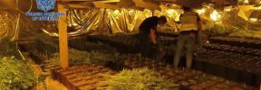 Cuatro detenidos en Palma en una operación contra el tráfico de marihuana