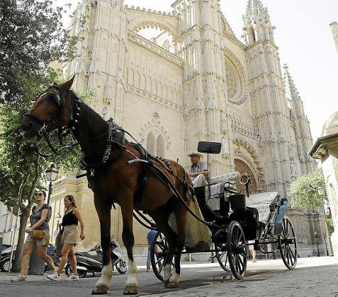 Los caballos de galeras estacionan entre la plaza de la Reina y Antoni Maura. Sobre estas líneas, el calesero Manuel Vargas.