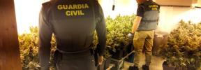 La Guardia Civil encuentra más de 400 plantas de marihuana en un piso del Arenal
