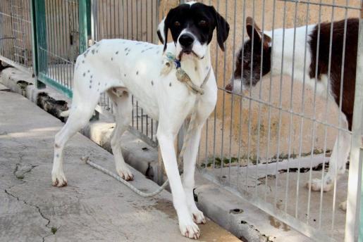 Cada día, decenas de animales son abandonadas en Mallorca.