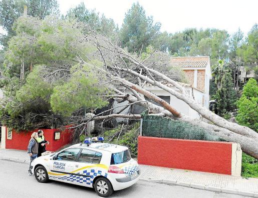 La Policía Local de Calvià revisó, en la mañana de ayer, la vivienda afectada. Fotos: MICHELS