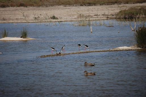 La mayor parte de las especies que habitan el parque son aves acuáticas.
