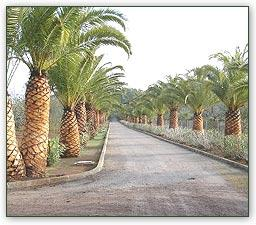 La empresa se dedica a la jardinería y agricultura ecológica.