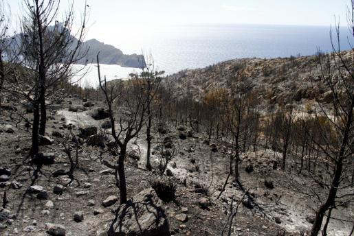 Imagen de la finca de La Trapa tras el terrible incendio que ha afectado a un 70 por ciento de su superficie.