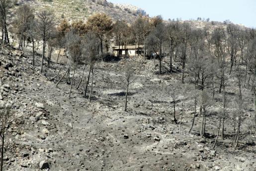 Uno de los parajes quemados en Andratx.