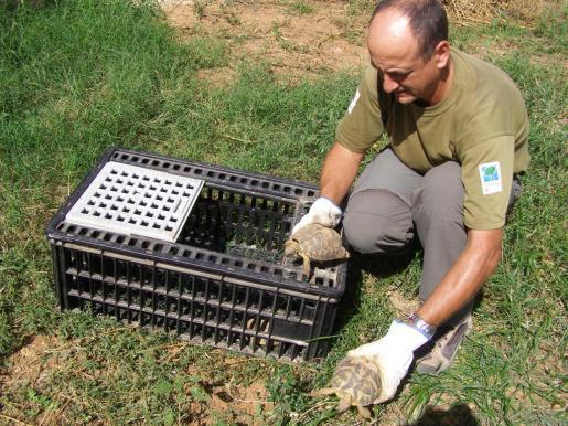 La suelta de ejemplares forma parte del programa para la conservación de esta especie protegida.