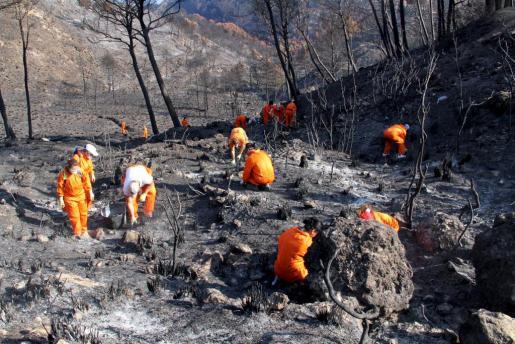 Un grupo de voluntarios trabajan en una de las zonas quemadas este verano.