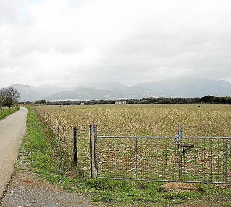 El centro se ubicará en el camino de Son Verd.