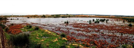 Vista panorámica de la zona del Pla inundada.