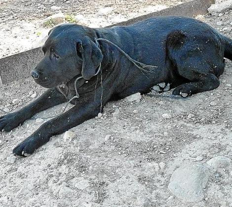 Imagen de uno de los perros abandonados el año pasado.