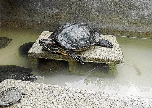 La captura de especies invasoras y la recuperación de protegidas son las prioridades del consorcio.