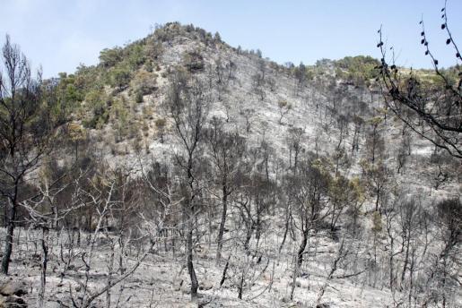 El incendio arrasó 1.500 hectáreas en Ibiza en 2011.