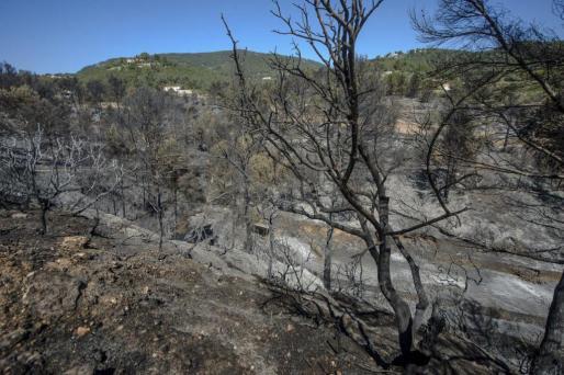 Vista general de los daños causados por el incendio que comenzó el sábado por la tarde junto a la carretera de Es Cubells.