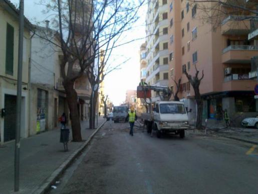 En la imagen, una de las actuaciones de la brigada de jardinería en la avenida Alcúdia.
