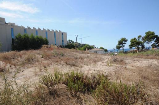 Las dunas de Camp de Mar, en Andratx, están amenazadas por una urbanización.