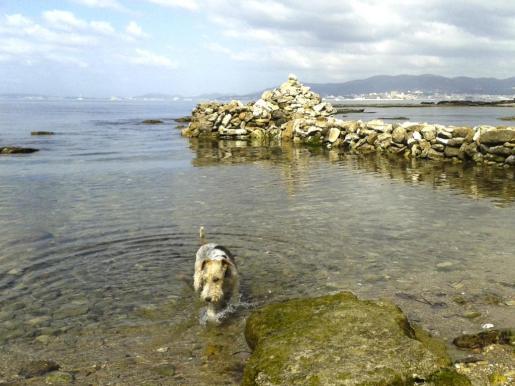 Algunas playas aceptan animales.