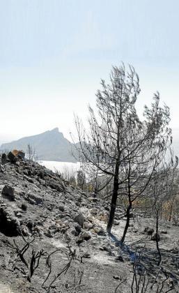 Las inmediaciones de la Trapa presentaban un 'paisaje lunar' tras el incendio.
