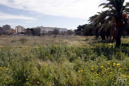 Cort ha autorizado la construcción del primer edificio de viviendas en Can Domenge.