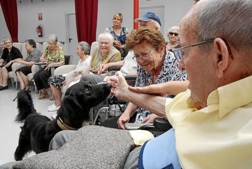 Un grupo de jubilados de Menorca se entretiene con un perro en un hogar de la tercera edad.