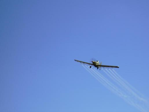El Govern ha iniciado una campaña de fumigación aérea contra la procesionaria.
