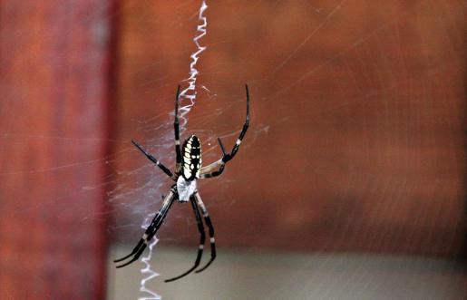 Imagen de archivo de una araña cualquiera.