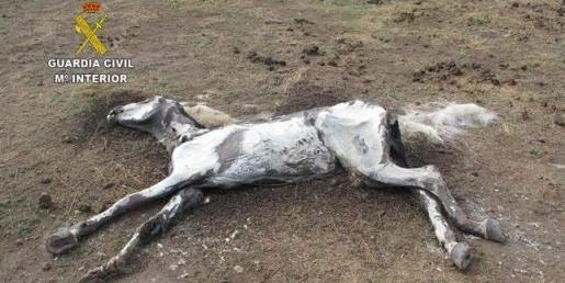 El caballo que participó en Águila Roja muerto por desnutrición.
