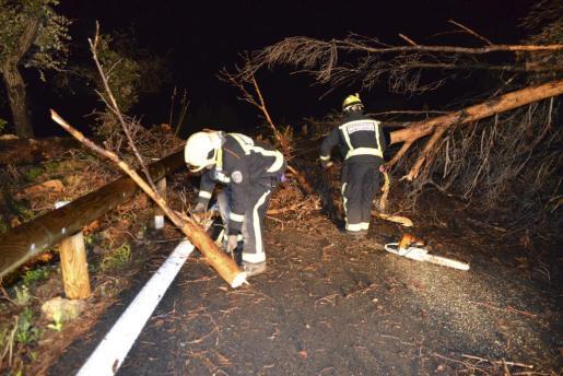 Los Bombers de Mallorca estuvieron varias horas cortando pinos que cayeron en la carretera Andratx-Estellens.