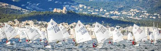 Imagen de la flota de Optimist en plena competición en la bahía de Palma con el Castell de Bellver al fondo.