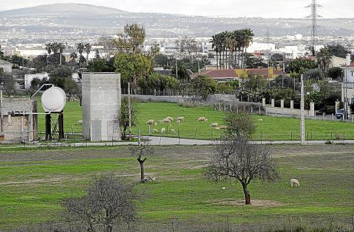Los ataques se han registrado en la zona de la possessió de Son Pons de la Terra, al lado de la carretera de Valldemossa.