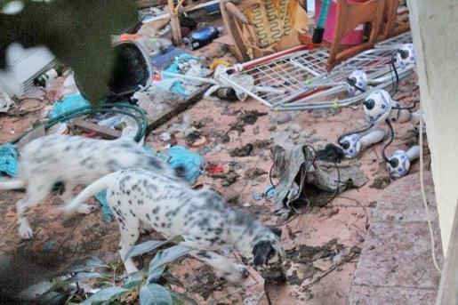 Dos canes paseando por la terraza entre todo tipo de residuos.