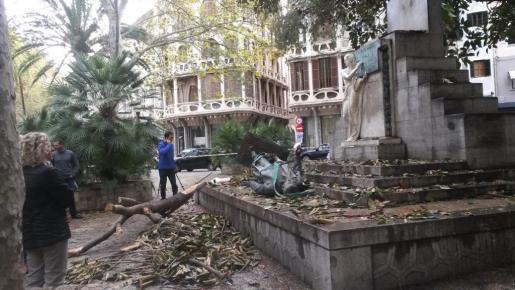 El departamento de Infraestructuras del Cort ha iniciado este lunes la retirada de todos los palmitos situados en las jardineras de la plaza del Mercat con el propósito de dar mayor visibilidad a la zona.