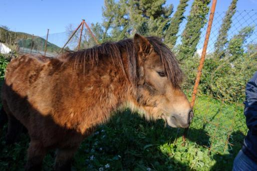 Foto del 'poni fugitivo'.