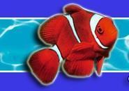 Mundo Acuario está especializado en todo lo relacionado con los peces.