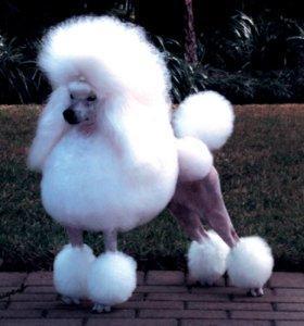 Tina y Tara ofrecen un completo servicio de peluquería canina.