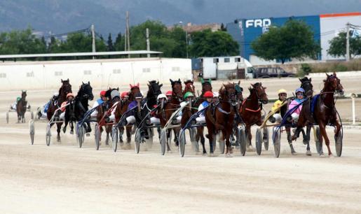 'Boira de Llevant' se impuso en el Gran Premi Nacional de Trot disputado en el hipòdrom de Son Pardo.