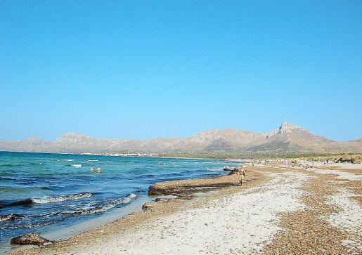 El pleno del Ajuntament de Artà aprobó en 2010 la máxima protección para la playa de sa Canova.