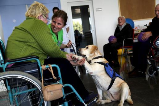 Demostración de una terapia con perros en el hospital Sant Joan de Déu.