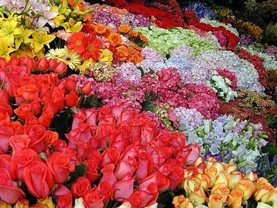 Flores para cualquier ocasión: bodas, difuntos, San Valentín...