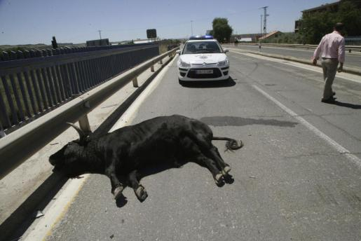 Vista del toro que se ha escapado de las inmediaciones de la plaza de toros de Talavera de la Reina y que posteriormente ha sido abatido por agentes de movilidad tras embestirle con un coche a la salida del Puente del Príncipe.