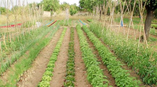 En todas las Illes existen 30.000 hectáreas declaradas como de producción agraria ecológica.