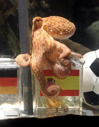 El pulpo Paul vaticina que ganaremos el Mundial.
