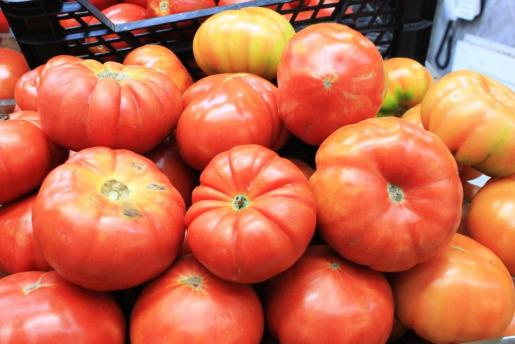 El tomate ibicenco será uno de los protagonistas del mercado durante los próximos meses. Foto: D.M.