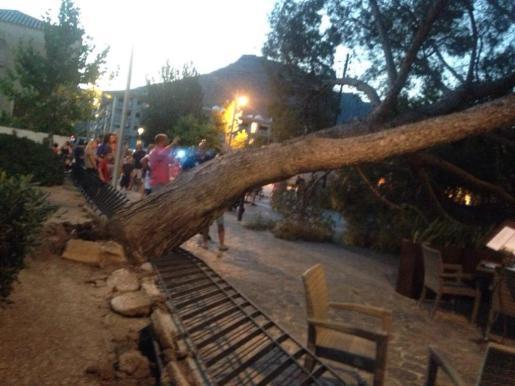 El pino cayó sobre la zona de los viandantes.