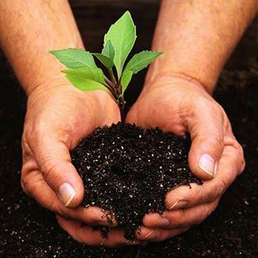 Caimari está especializada en jardinería.