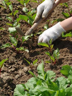 En vivero Son Sard se pueden encontrar desde plantas hasta productos para su cuidado.