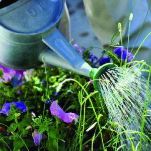Vivero Fornells cuenta con una amplia variedad de plantas.