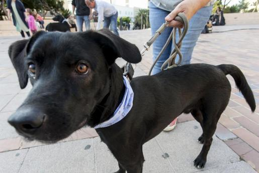 Un perro para una posible adopción.