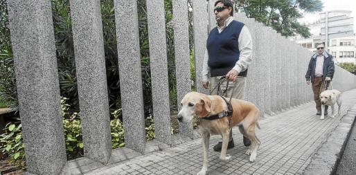 Los canes indican a sus dueños los obstáculos, pero éstos son quienes se orientan e indican. Foto: DANIEL ESPINOSA